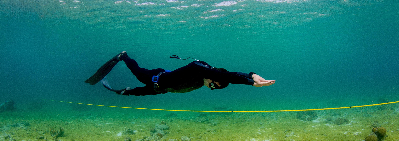 cursos de freediving en el caribe