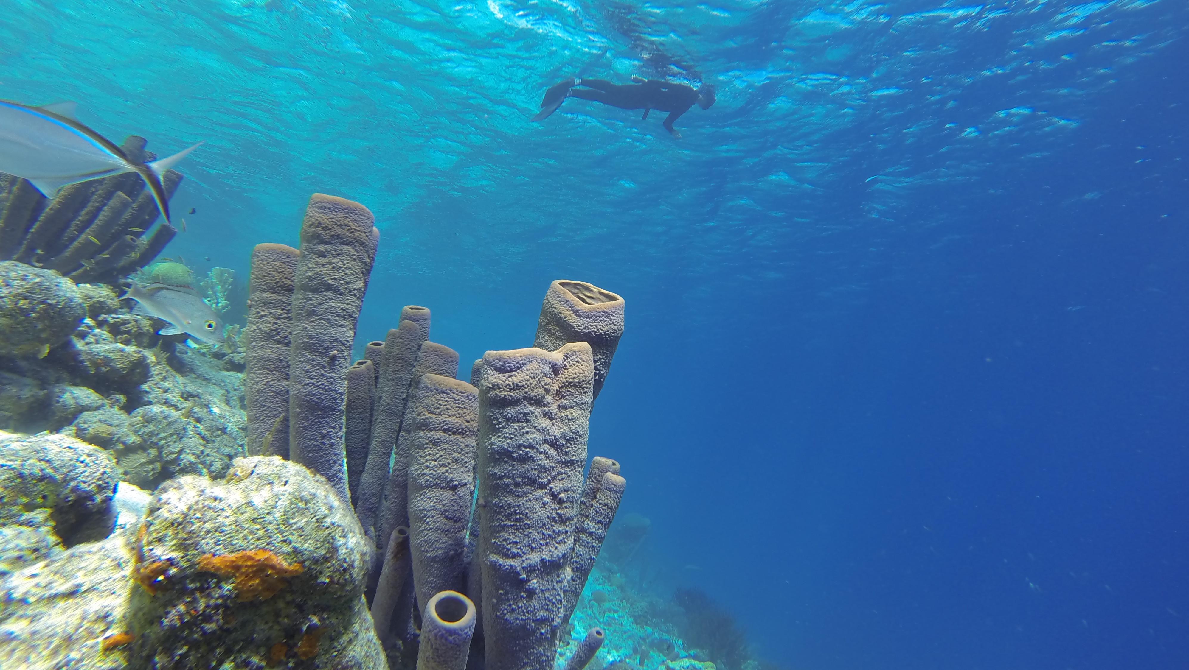 Deepsea Campamento Apnea